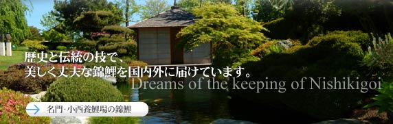 Dreams of the keeping of Nishikigoi
