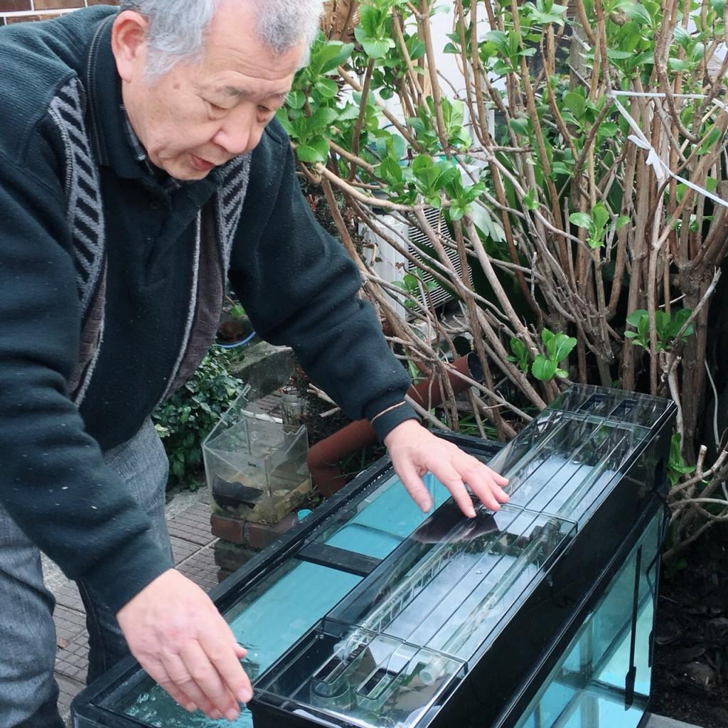 桜井さん水槽①